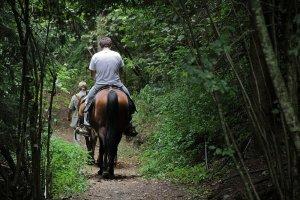 mężczyzna na koniu w lesie