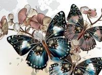 naklejki na laptopa motyle
