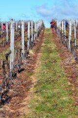 postaw na profesjonalny sprzęt do uprawy winorośl